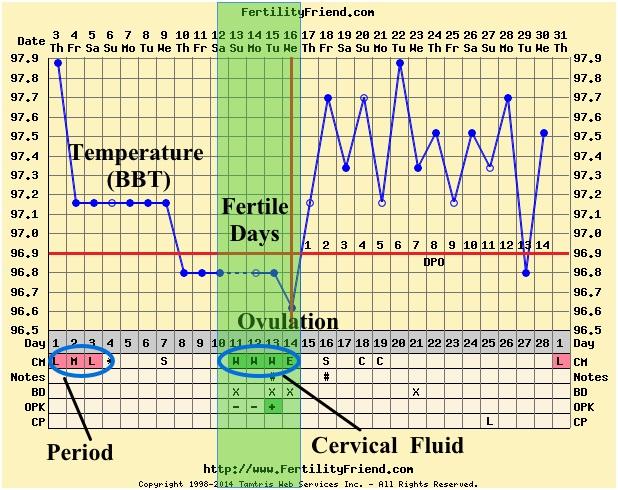 ovulation-fertility-chart