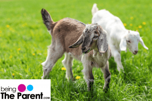 Any Disadvantages Of Feeding Babies With Goat Milk