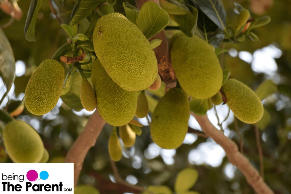 Eating Jackfruit During Breastfeeding – Is It Safe?