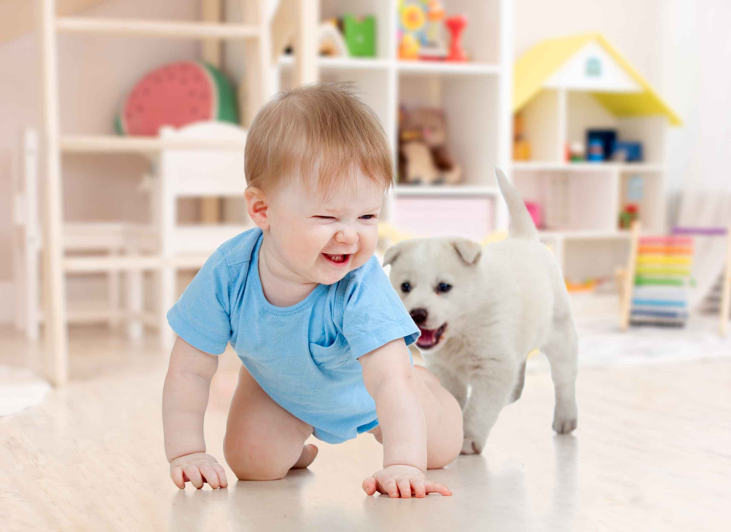 home pet and baby friendly
