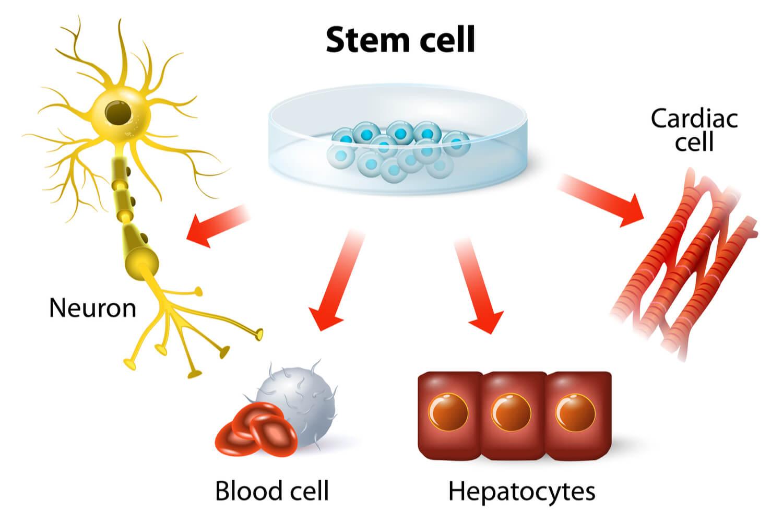 stem cell benefits