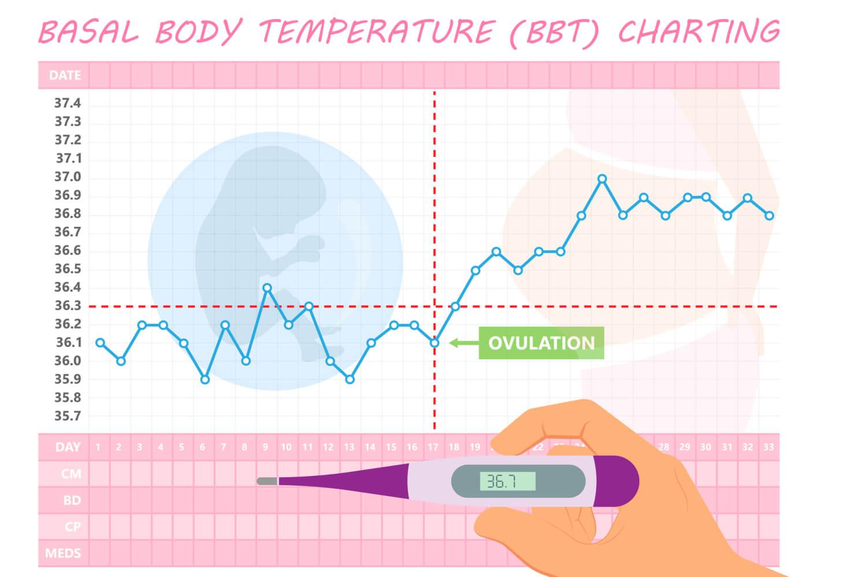 basal Body temperature chart(BBT chart)