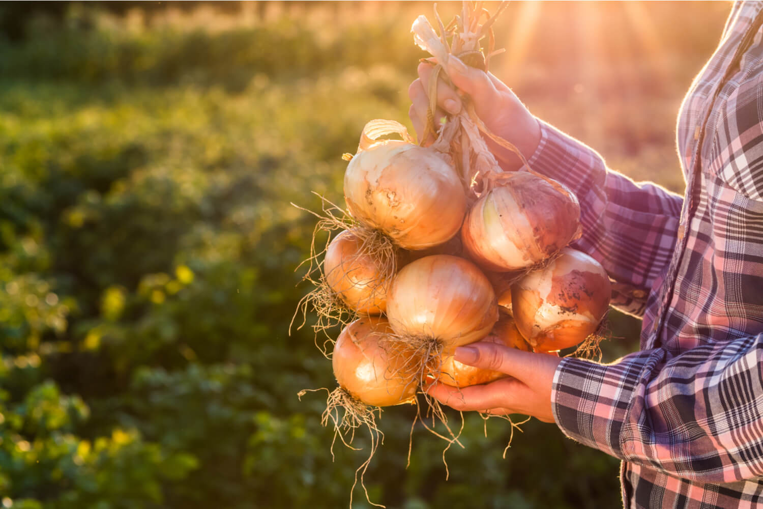 woman holding bunch of onions